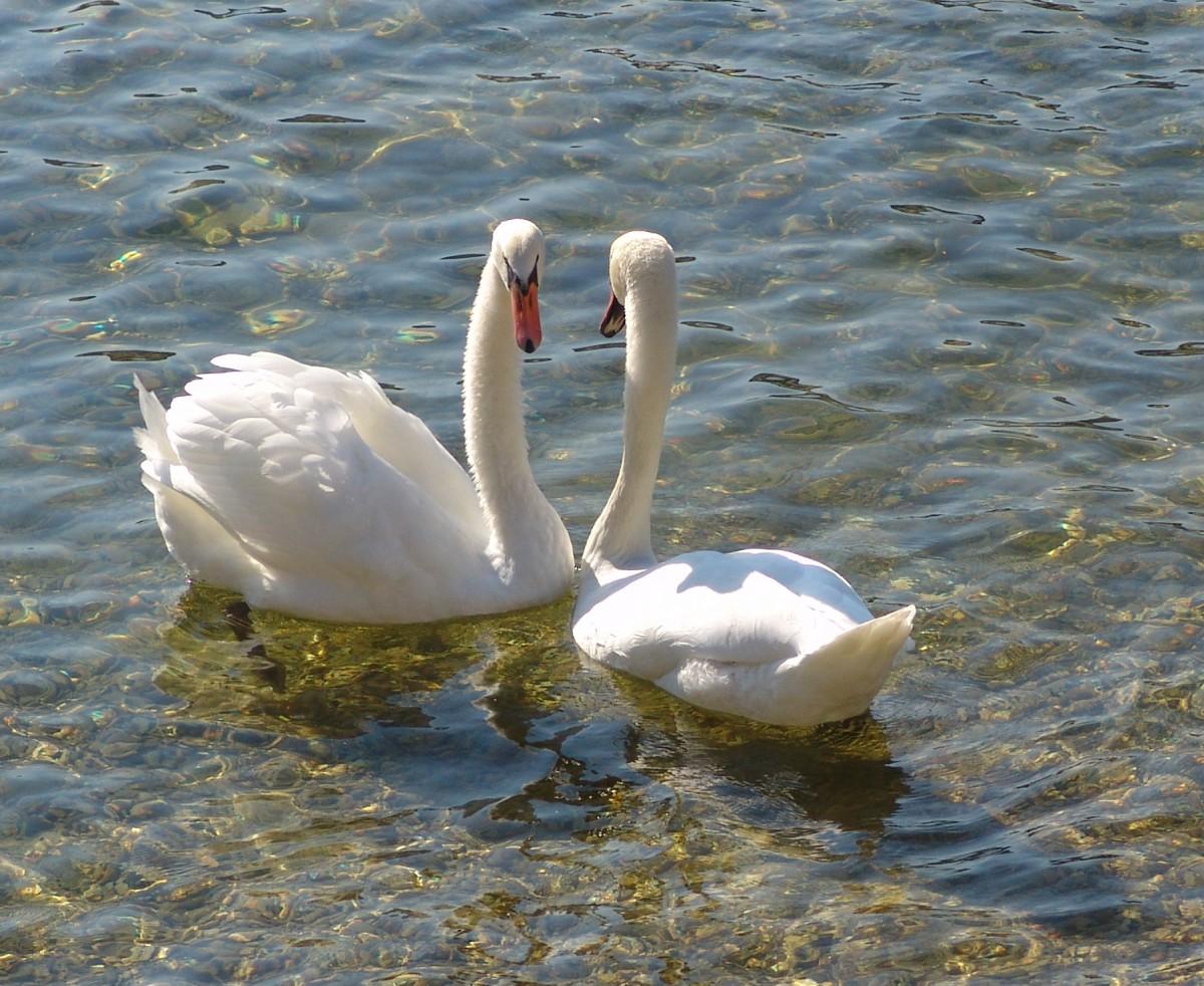 Romantik am See im Strandhotel Aseleben